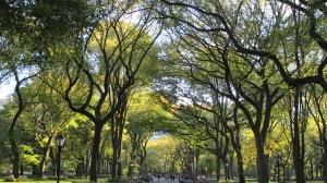 Autumn Leaves Outono em NY - out/2012
